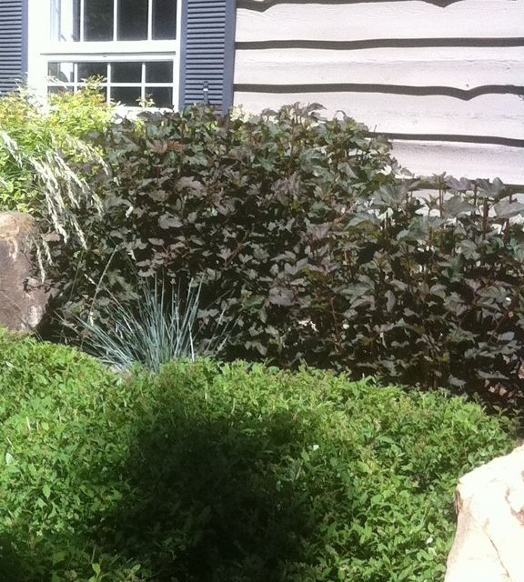 10 Landscape Mistakes To Avoid When Decorating Your Backyard: 17 Best Ideas About Landscaping Shrubs On Pinterest