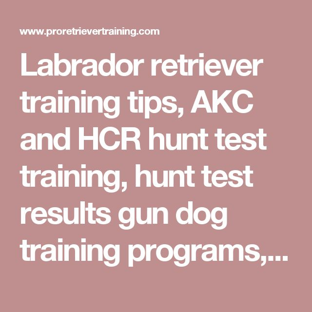 Labrador retriever training tips, AKC and HCR hunt test training, hunt test results gun dog training programs, professional Labrador retriever dog trainer,, yellow and black Labrador retriever puppies for sale