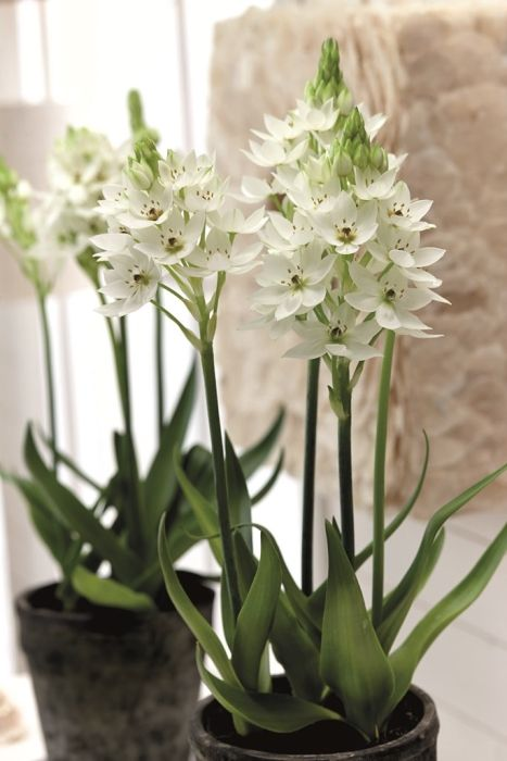 458 Best March: Wedding Flowers In Season UK Spring Inspiration Images On  Pinterest | Flowers, Plants And Beautiful Flowers
