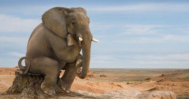 elefante - Cerca con Google