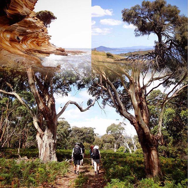Maria Island er en lille ø ud for Tasmaniens østkyst.Her har Anny fra Nyhavn Rejser været på en af de skønneste vandreture i sit liv  #MariaIsland #tasmanien #australien #tasmania #Australia #nyhavnrejser #natur #nature #hiking #hike #PlacesAroundEarth #BestVacation #travel #Vacation #TravelAndLife #nature #worlderlust #instatravel #travelgram