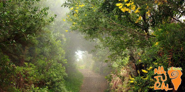 Il bosco incantato © 2016 La Palma Natural - Isola de La Palma