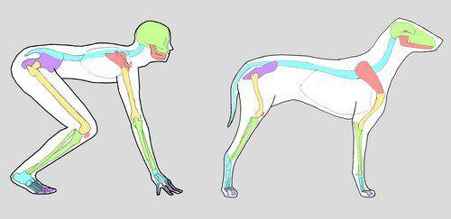 BIO370-Mammal Skeletons