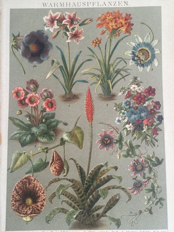 Antique Mono litograph 1897 plants greenhouse by ArteEtBrocante