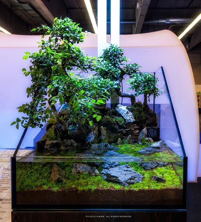 My First Paludarium Based On The