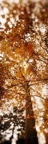 Low Angle View of Autumn Trees, Volunteer Park, Capitol Hill, Seattle, King County, Washington Photographic Print - AllPosters.co.uk
