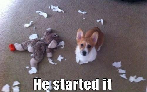 #pets funny cute corgi