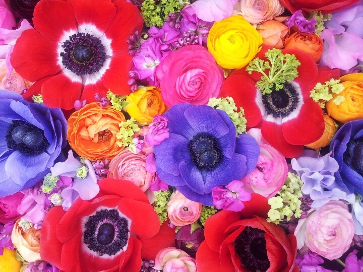 Colours make you bloom  Moods By Sarah