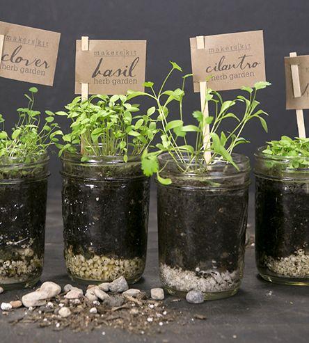 DIY Mason Jar Kitchen Herb Garden Kit by MakersKit on Scoutmob