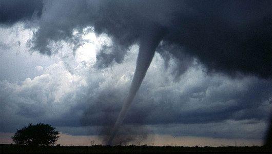 Real-life Sharknado: 5 actual instances of animal tornadoes #sharknado #science #animals