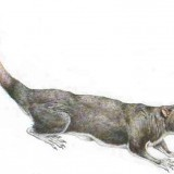 Multituberculates, a group of rodent-like mammals that existed for approximately 120 million years, survived after dinosaur extinction because they were adapted to eating flowering plants, say scientists.Prehistoric, Rodent Lik Mammals, God Amazing, Amazing Creations, Extinct Mammals, Ancient Artifacts, Flower Plants, Eating Flower, Dinosaurs Extinct