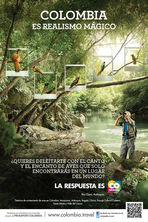 EL CANTO Y EL ENCANTO DE AVES QUE SOLO ENCONTRARÁS EN UN LUGAR DEL MUNDO | Proexport - Colombia es Realismo Magico