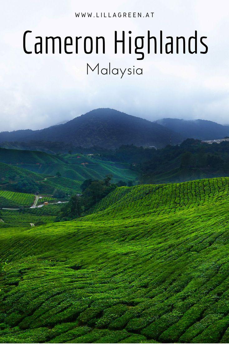 Visit the Tea Plantations in Cameron Highlands, Malaysia
