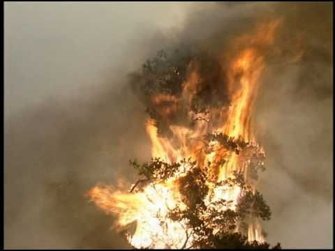 FREE FOOTAGE - Forest Fire Burning Tree