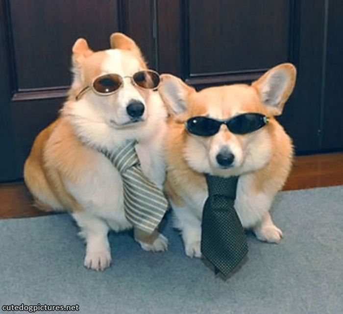 cool dressed up dogs – Cute Dog Pictures