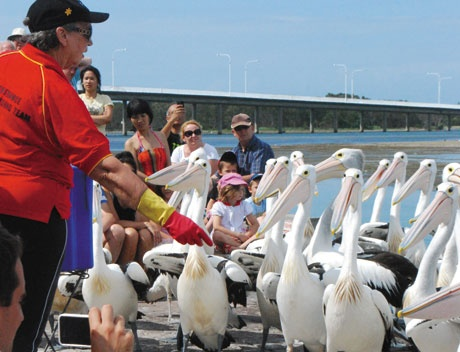 Meet the Pelicans at the Entrance  Kids Welcome