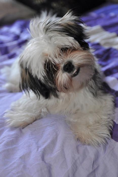 Bella mijn aller liefste hondje en grote trots