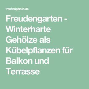 Freudengarten - Winterharte Gehölze als Kübelpflanzen für Balkon und Terrasse