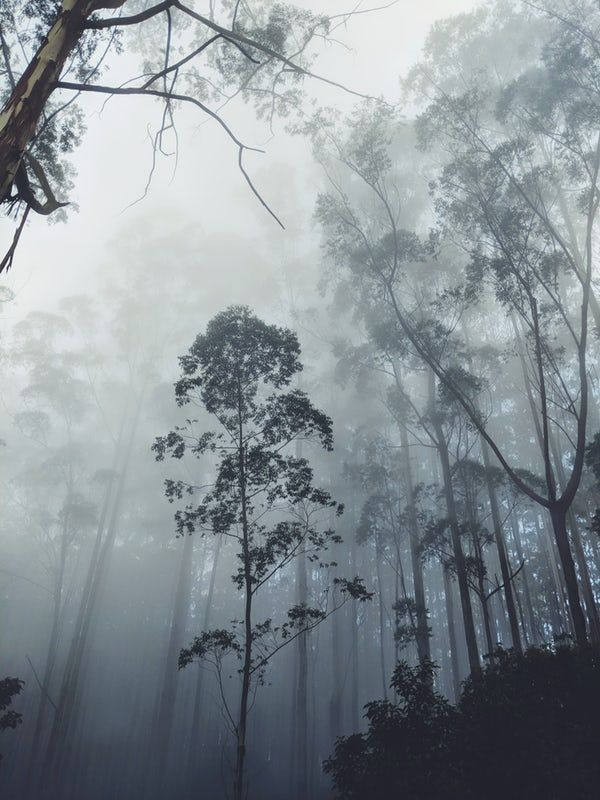 My First Collection 17 Best Free Fog Wood Mist And Forest Photos On Unsplash Forest Photography Fine Art Landscape Photography Landscape Photography