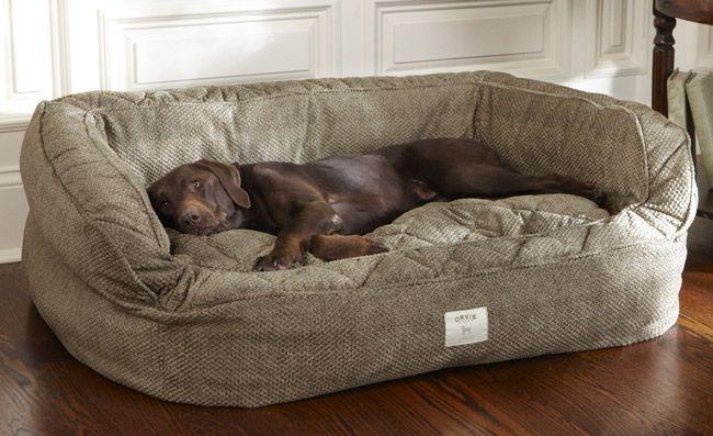 4 Motivos para não dividir a cama com seu cachorro