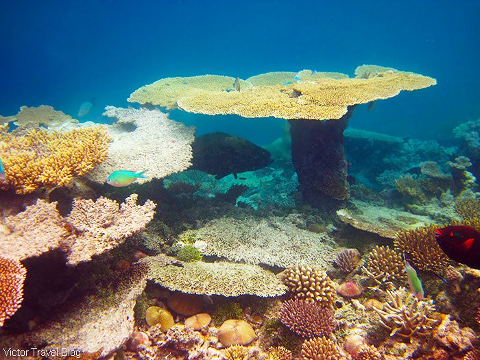 123 best Underwater World images on Pinterest  The maldives
