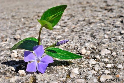 Germoglio e fiore nel cemento