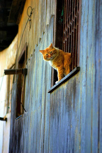 Gato de Valparaiso | by puconex on Flickr. http://cybergata.tumblr.com/