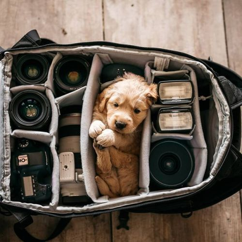 Ready to go met deze perfecte uitrusting voor zowel close-ups als wide-angle shots! Wat zou jij graag nog willen toevoegen aan je gearbag? #teamcanon #canonphotography #canongearshot #gear #gearbag Photo credit: @cnkillingsworth (Canon EOS 5D Mark IV 35mm f/1.4 L II USM) via Canon on Instagram - #photographer #photography #photo #instapic #instagram #photofreak #photolover #nikon #canon #leica #hasselblad #polaroid #shutterbug #camera #dslr #visualarts #inspiration #artistic #creative…