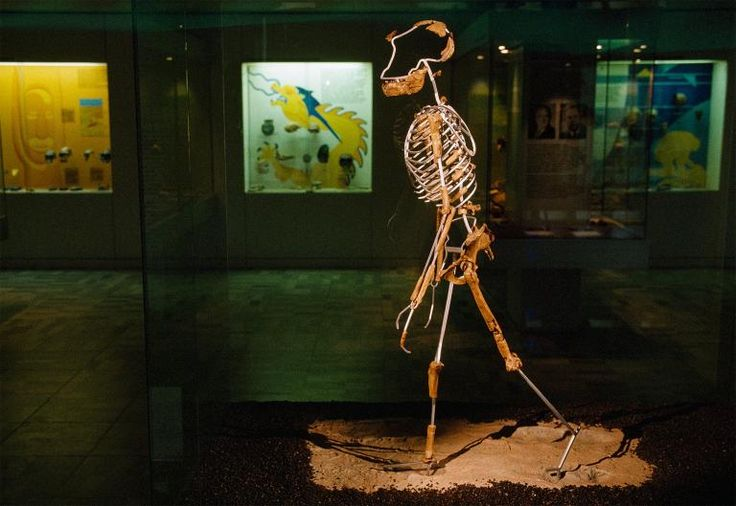 Picture of a skeleton reconstruction