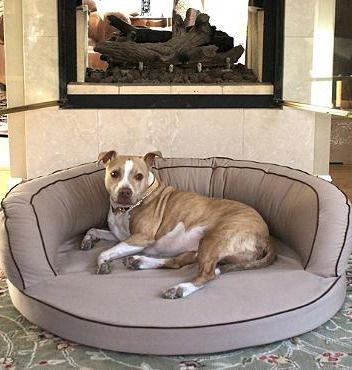 This orthopedic dog bed is especially beneficial for older pets with arthritic and orthopedic conditions.