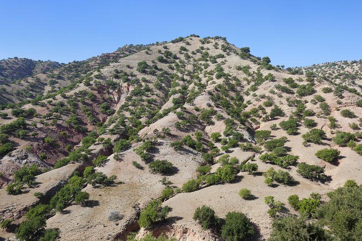 Arganbäume liefern das Arganöl. Es ist reich an ungesättigten Fettsäuren mit antioxidativem Potential. Ideal für die reife Haut.