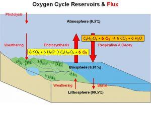 manfaat laut menghasilkan oksigen