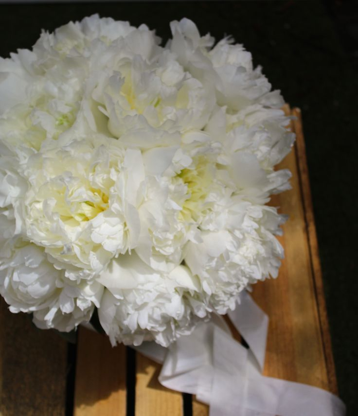 Pure white peonies & simple silk ribbons. Perfect.