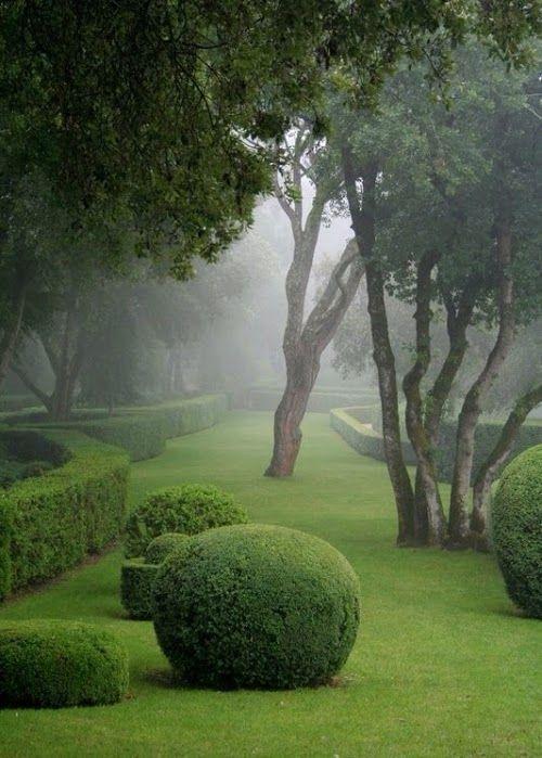 Jolie jardin dans la brume.