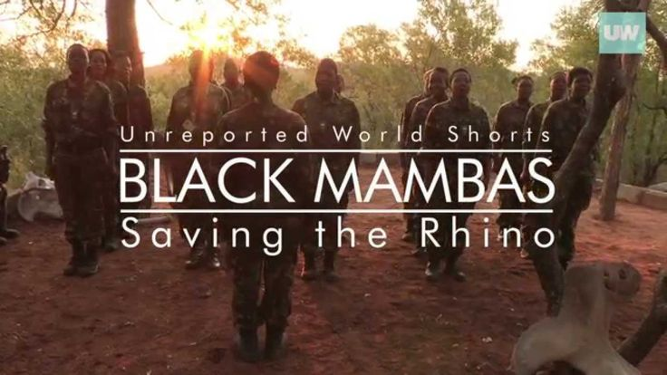Black Mambas: Saving The Rhino | Unreported World Shorts | Channel 4.  Last year 1,215 rhinos were killed in South Africa - Poachers are killing one animal every seven hours and if they continue at the same rate, rhinos will become extinct in the wild in less than 10 years. But a new group has emerged to fight for the the rhino's survival: The Black Mambas - a unit of 26 women from villages around Balule, a collection of privately owned game reserves in South Africa.