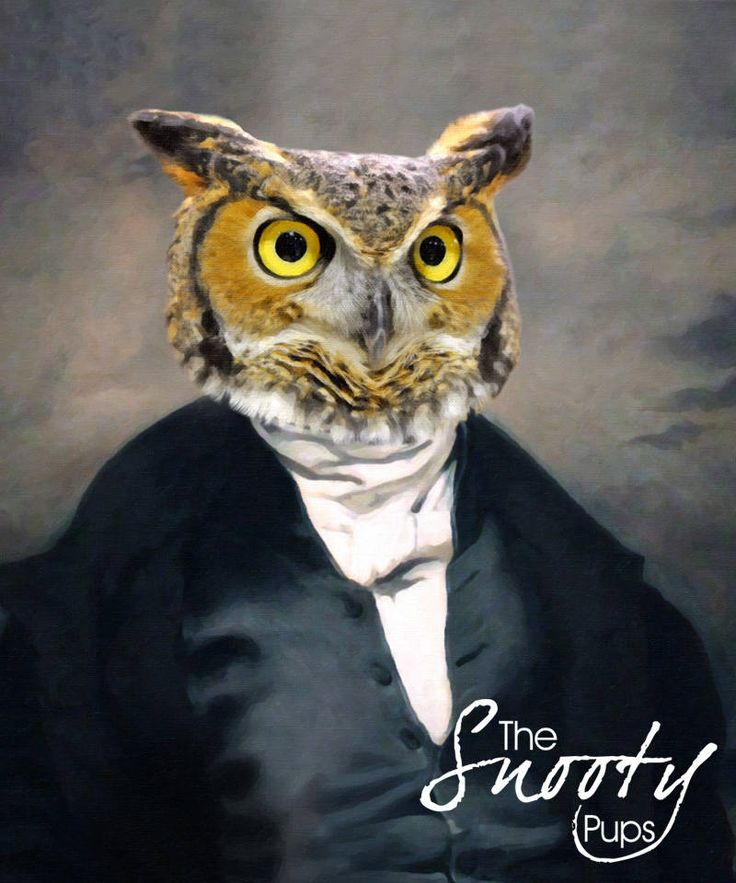 Now trending: Owl Picture https://www.etsy.com/listing/541249710 #interiordesign #bestgiftever #dogsofinstagram #etsyseller #etsyshop #birthdaygift #perfectgifts #artforhome #etsy