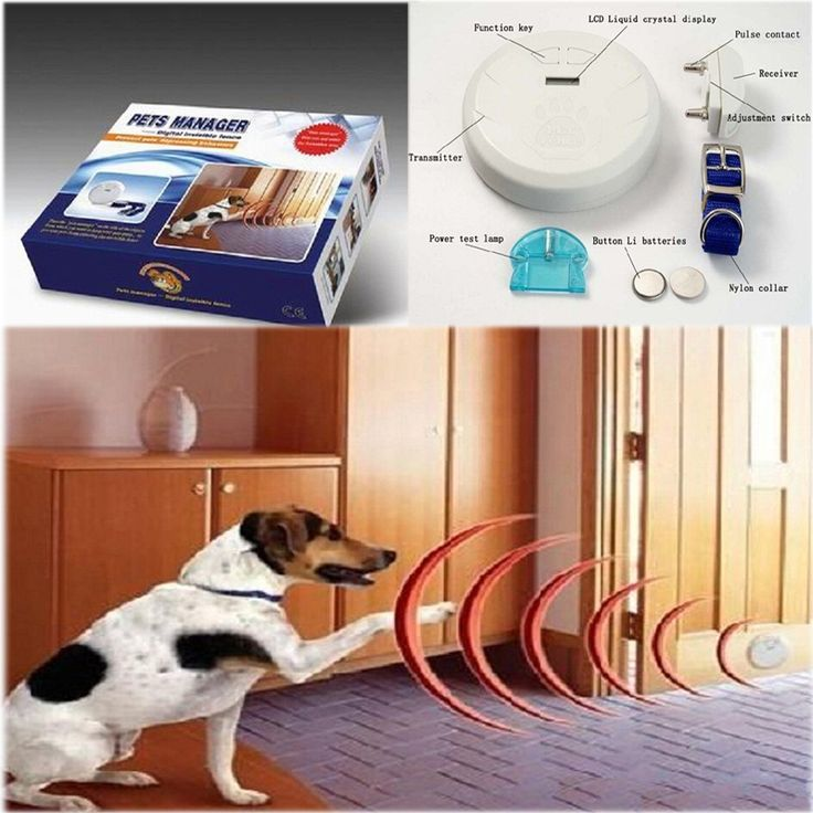 Find More Houses, Kennels & Pens Information about New Coming Pets Manager dog digital invisible fence Pet Dog Barrier System Bark Collars for dog PE004,High Quality barrier bag,China barrier security Suppliers, Cheap collar corner from Triangel store on Aliexpress.com