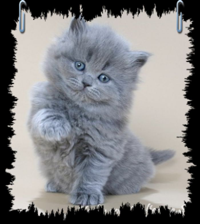 Картинки по запросу красивые котята