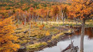 Caminos del viento: Salvemos el bosque nativo.