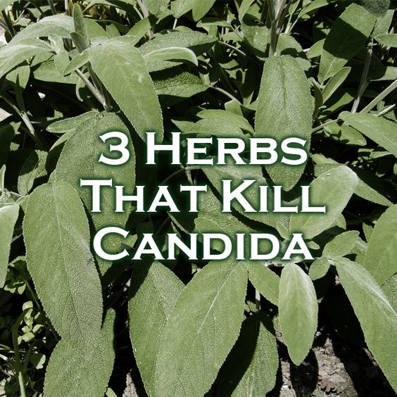 -------------------------------- 3 Herbs That Kill Candida --------------------------------
