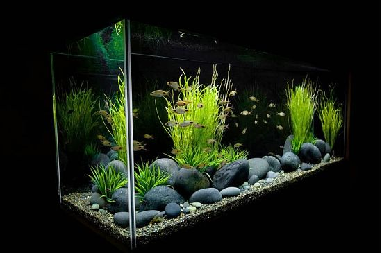 planted freshwater aquarium setup | Aquarium Design Group is a full service custom aquarium design ...