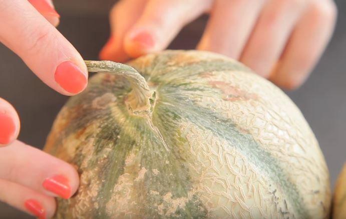 Les 8 techniques à connaître pour choisir vos melons et vos pastèques noté 3.5 - 8 votes C'est en été que les plus beaux fruits arrivent. Synonymes d'exotisme et de rafraîchissement, c'est la touche douce et sucrée qui nous ravit tout au long de la journée. Parmi les fruits qui séduisent le plus nos papilles...