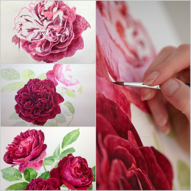 The velvety petals and rich hues steal the show on the Darcey Bussell Rose!