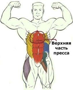 Упражнения для верхнего пресса