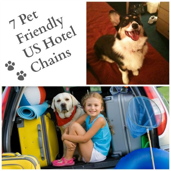 7 Pet Friendly US Hotel Chains Good to know for travel or in case a natural disaster happens. #PetFriendly