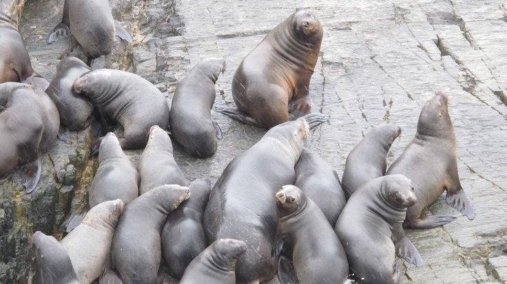 Interesting encounter with sea lions