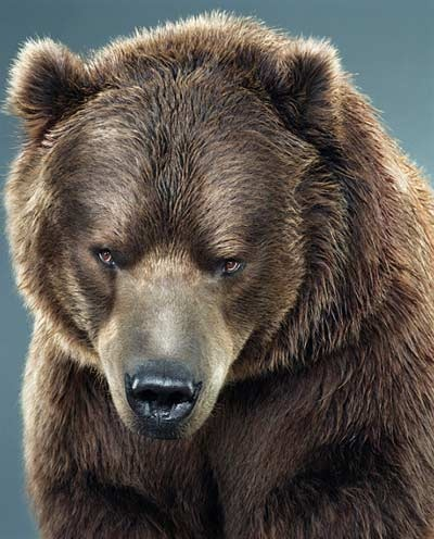 17 Best images about Bears on Pinterest | Polar bear cubs, Bear ...