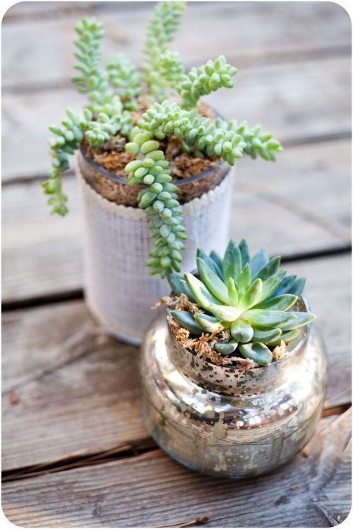 Have I mentioned I'm a sucker for succulents? Can't tell if decorating the tables like this would be a pricey venture, but I love the thought of incorporating living pieces. Between his trees and my plants this is definitely representative of us and our personalities.