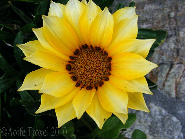 flowers | Flowers 134copyright