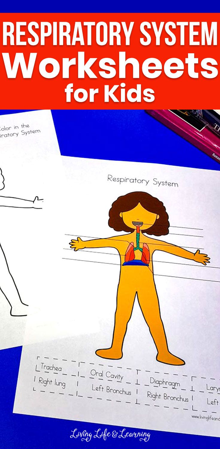 Respiratory System Worksheets For Kids Worksheets For Kids Human Body Lesson Playtime Activities